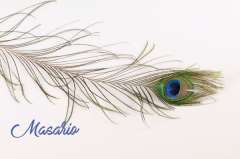 Peacock Feather (Natural)