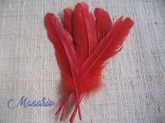 5 Plumas de pavo 15-17 cm