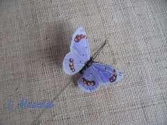 Mariposas de plumas moradas