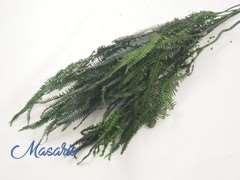 Ramas de hojas de Helecho