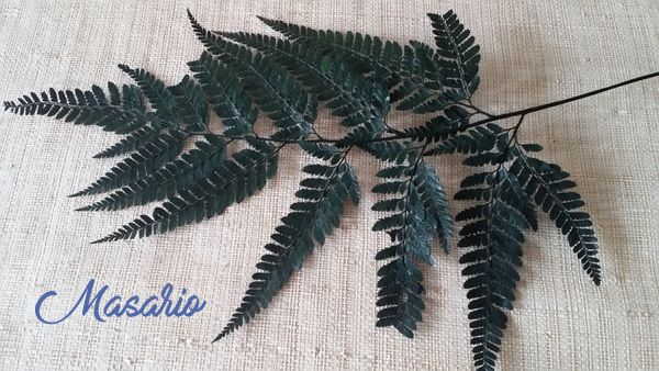 Fern Leaves  21 X 19 cm aprox.