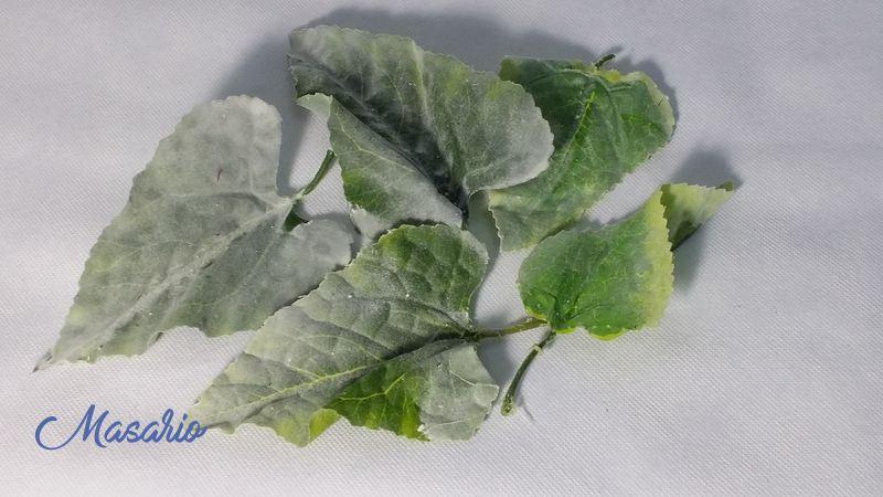 5 Velvety leaves 10-12 cm