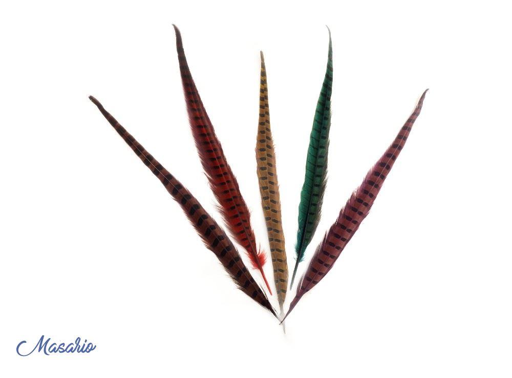 Plumas de faisán común de 45-50 cm aprox