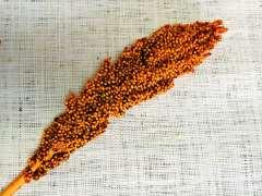 Flores de pimienta
