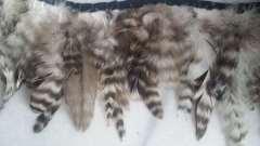 Fleco gallo Grizzly 10-15 cm