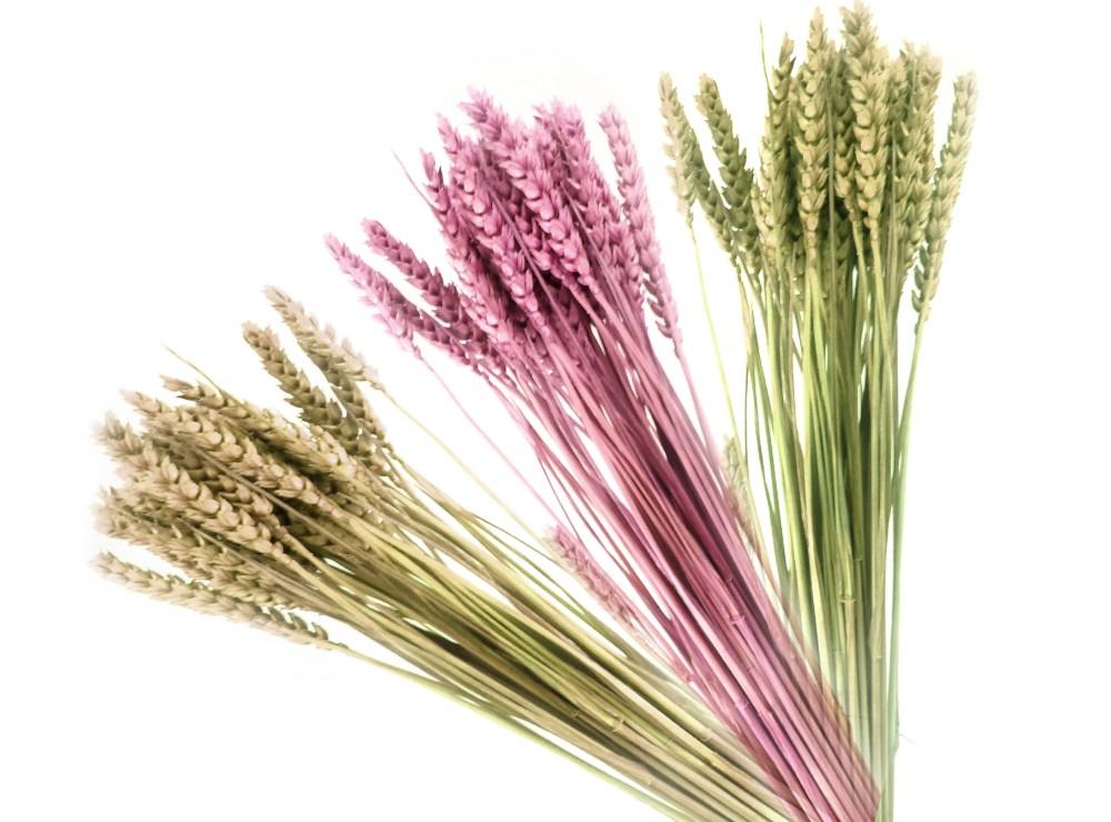 Wheat sprigs